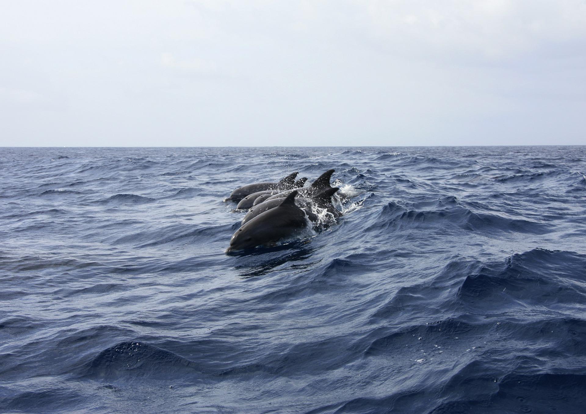 dolphin 402288 1920