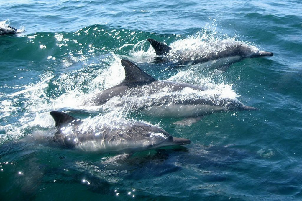 dolphins 327051 1920